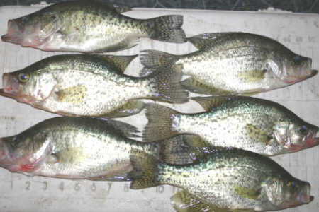 Crappie Fishing In NY